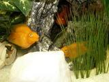 Рыбки, успокаивают или раздражают…